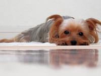 唯一の小型犬可!物件